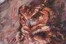 The Owl