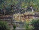 Pond at Finn Camp